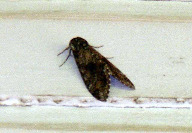 Mothra!