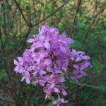 Clarksville Blooms!