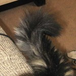 A tale of tails…