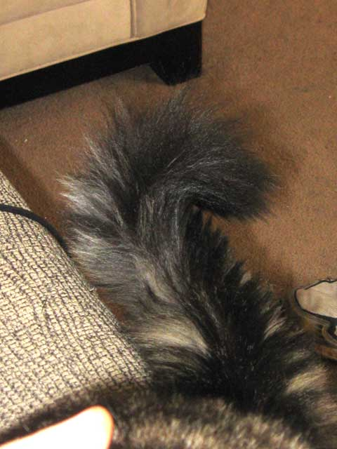 Pierre's tail in its customary quesiton mark...