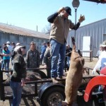 Hog Hunting…the 4-legged kind…