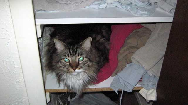 Pierre in the Linen Closet