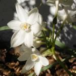 Surprise Blooms