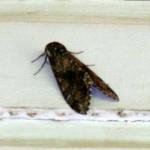 Mothra Attacks the Meyer Casa