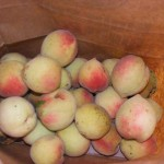 Oh Peaches (pictures)