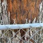 Lightining traveled from the tree to the fence